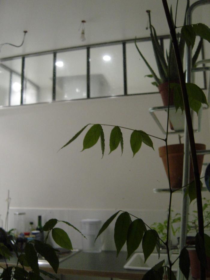 Studio : 5